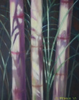 2013 Bamboo Study 36 by  48