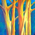 2014 Hawaian Rainbow Eucalyptus 48 by 48